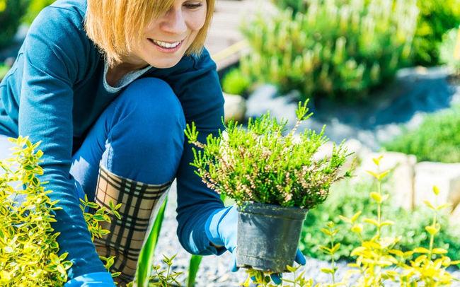 Beneficios de practicar la jardineria