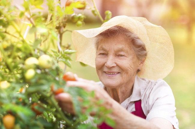 Beneficios de la jardineria en la tercera edad