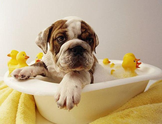 cuida-la-higiene-de-tu-perro