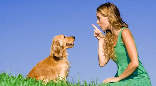 educa-a-tu-perro-correctamente