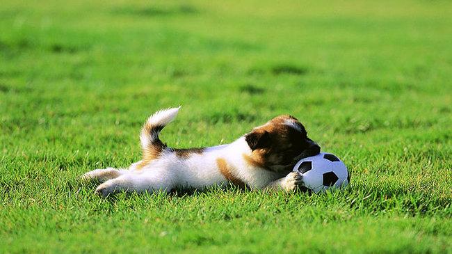 juega-con-tu-perro