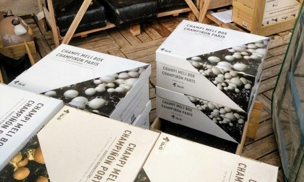 Ya tenemos a la venta los kits de cultivo de setas