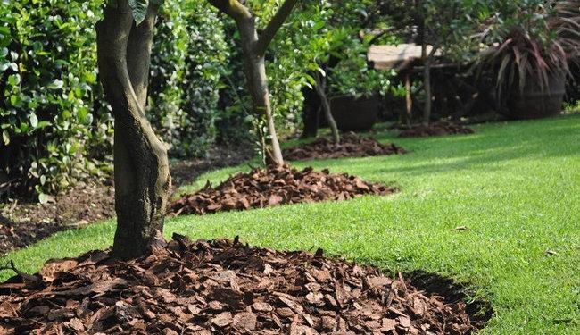 corteza-de-pino-proteccion-raices-arboles
