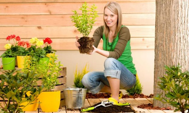 Consejos para principiantes en el cuidado del jardín