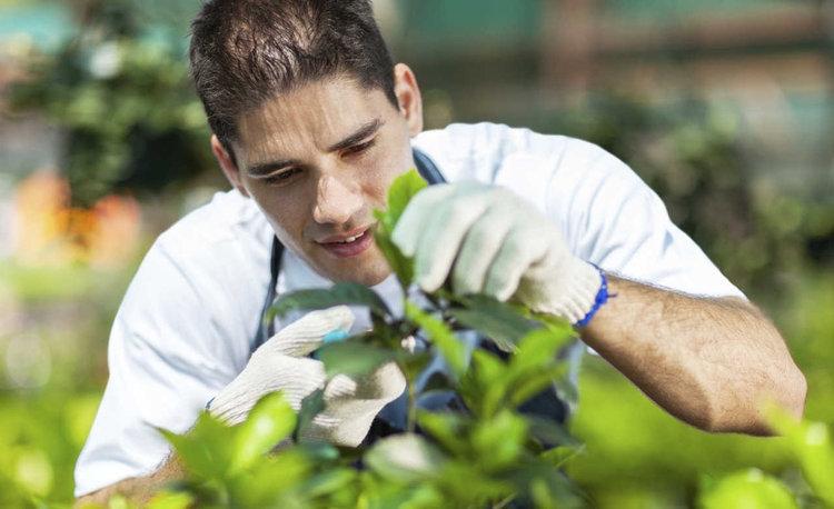 Consejos para principiantes en el cuidado del jardín.
