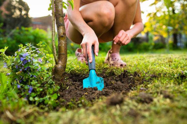 Consejos para principiantes en el cuidado del jard n garden catalunya plants sant vicen - Cuidado de jardines ...