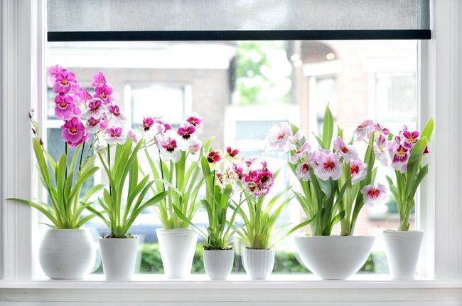 Plantas de interior cerca ventana para recibir luz solar en invierno