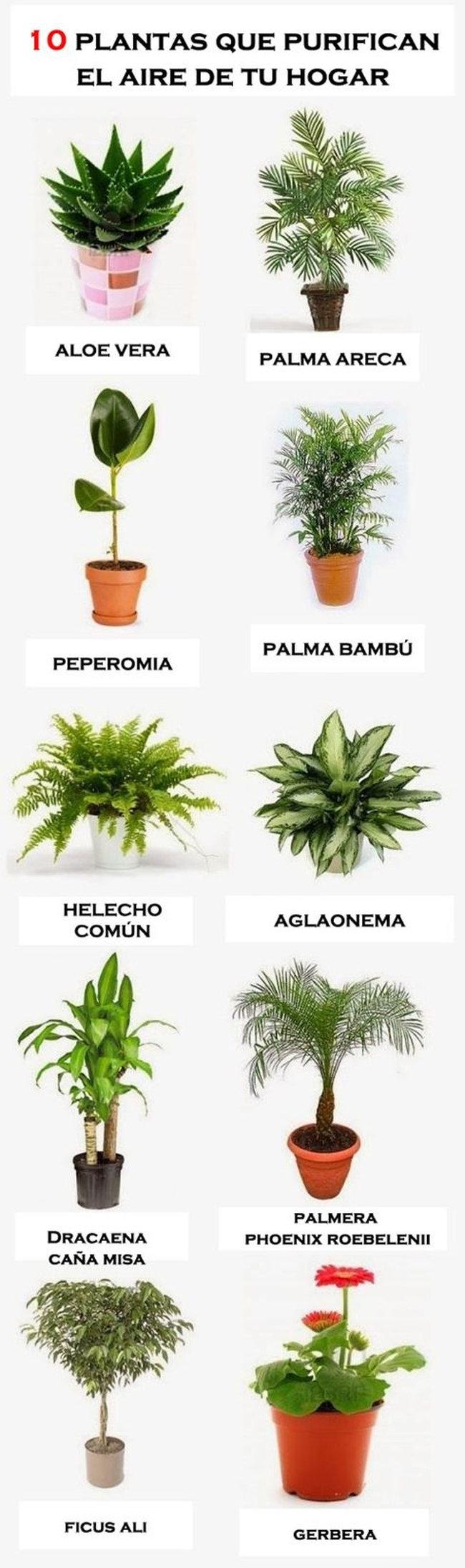 10 plantas que purifican el aire de tu hogar infograf a Plantas limpiadoras de aire