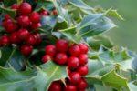 agenda-jardin-diciembre
