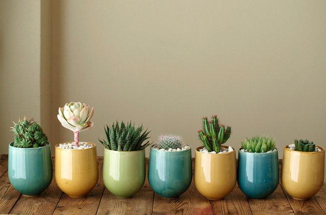 cactus-artificiales
