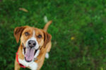 como-educar-bien-a-perro-con-comida