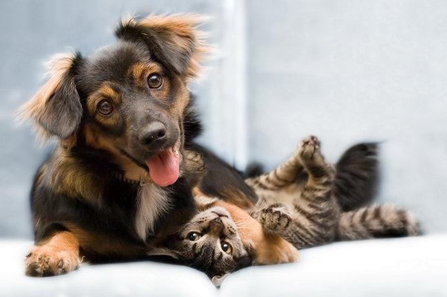gato-perro-juntos2
