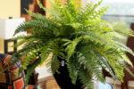 planta-artificial-de-calidad