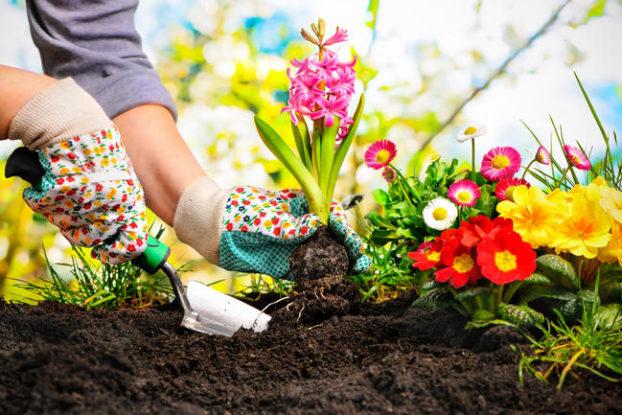 consejos-de-seguridad-y-salud-en-jardineria