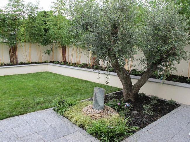 Rboles adecuados para jardines peque os garden for Jardines pequenos horizontales