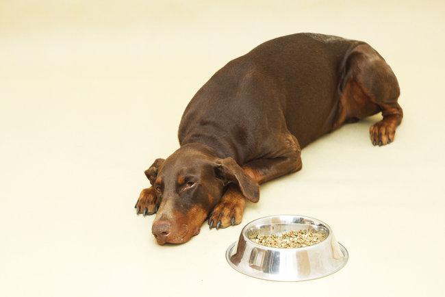 perros-con-poco-apetito