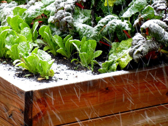 tareas-huerto-enero-invierno
