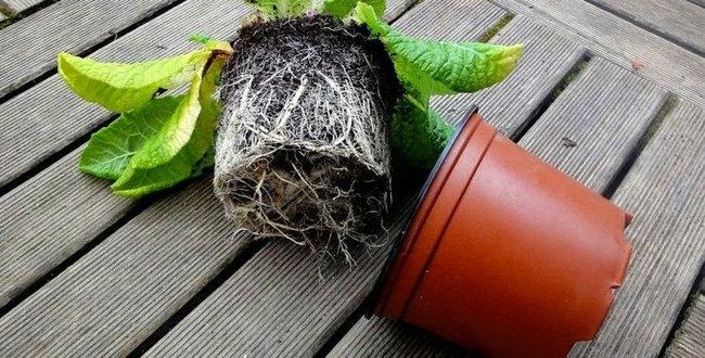 transplantar-plantas