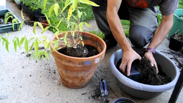 trasplantar correctamente las plantas del jardin