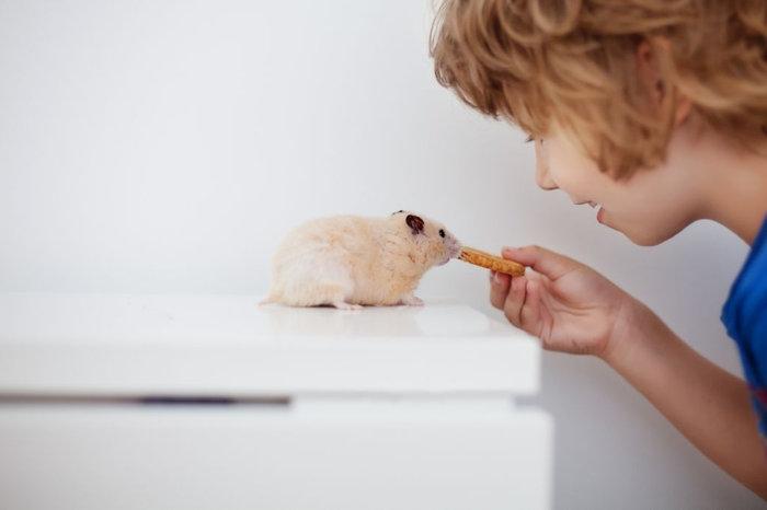 El Hámster: una primera mascota ideal.