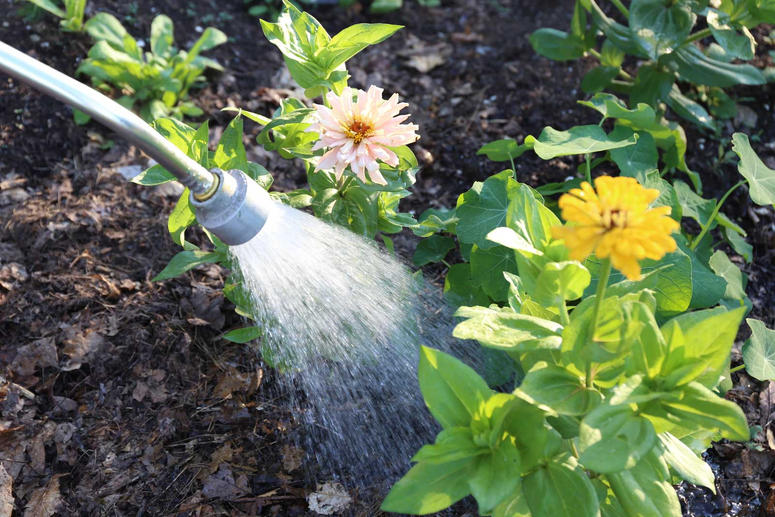 como-evitar-plantas-estropeen-calor-verano