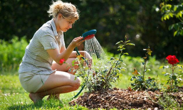 Cómo evitar que el calor destruya tus plantas