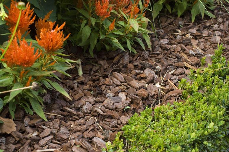utilizar-mulching-protege-calor-plantas