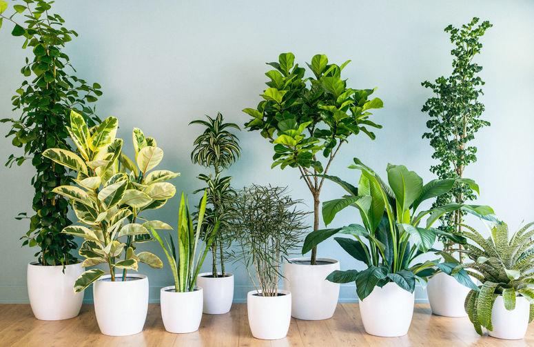 cuidado plantas de interior en verano
