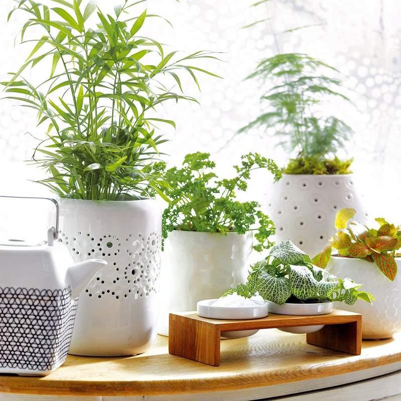 Cuidado plantas de interior en agosto