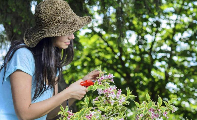 Recupera tus plantas a la vuelta de las vacaciones