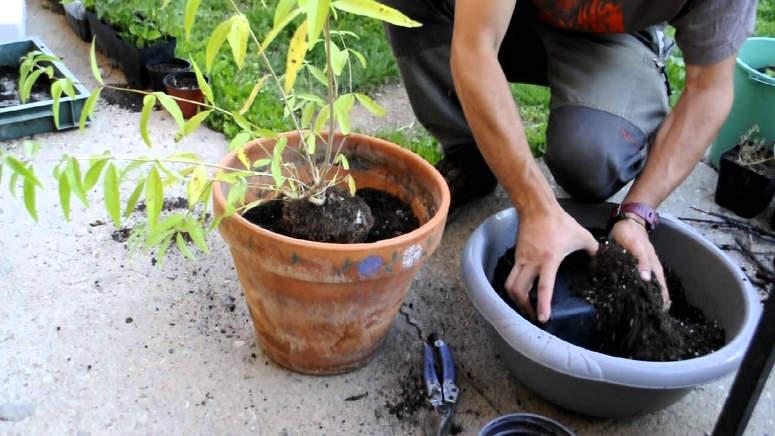 transplante-plantas