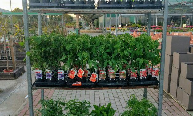 Plantel de Hortaliza de primavera-verano de nuevo a la venta