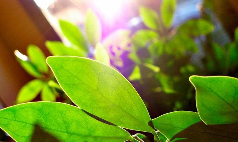 aportar-llum-plantes-interior