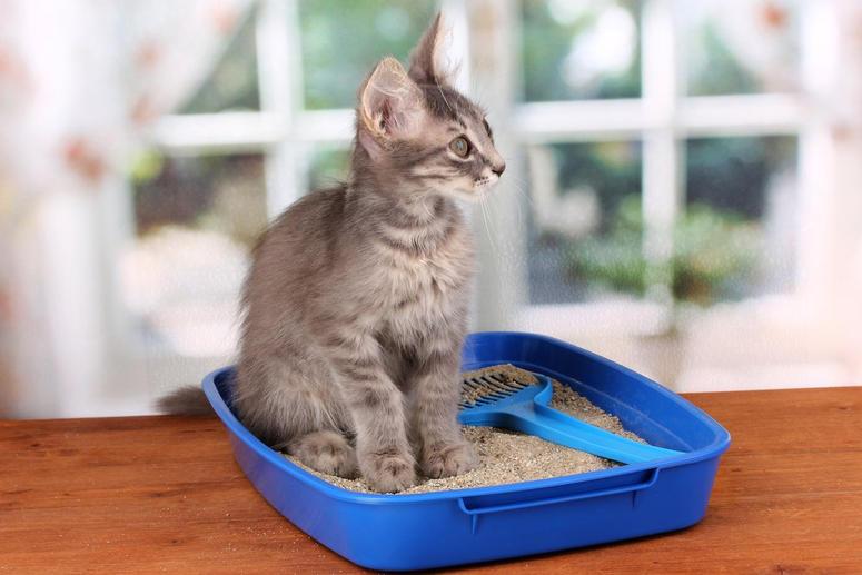 caja-de-arena-gatos