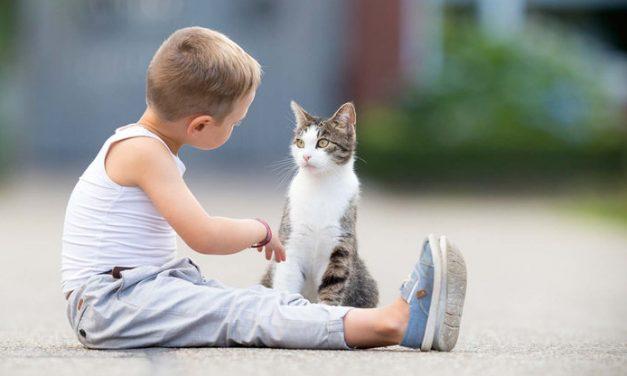 Cómo educar a un gato