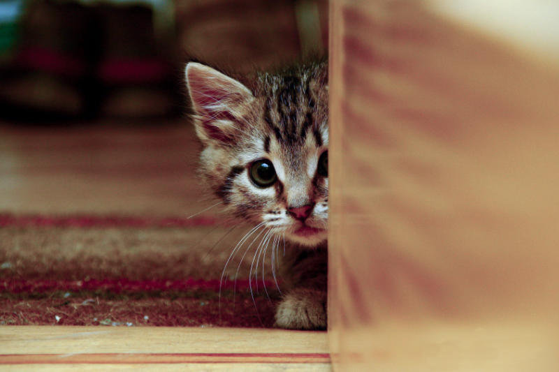 como-entrenar-a-un-gato
