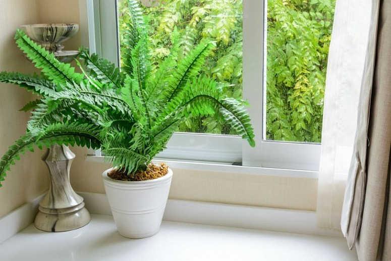 cuidado-plantas-interior-septiembre