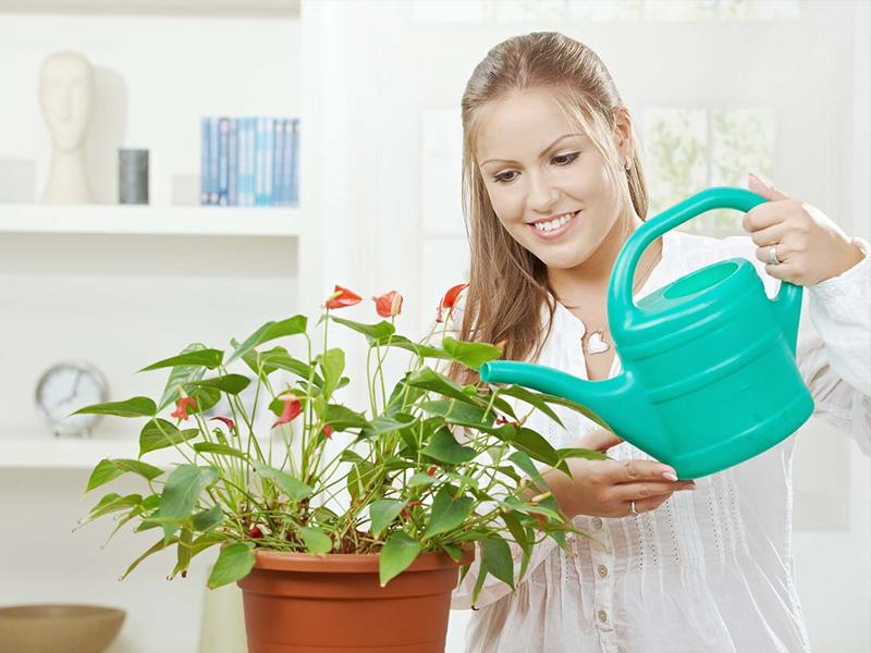5 maneras de matar a una planta de interior