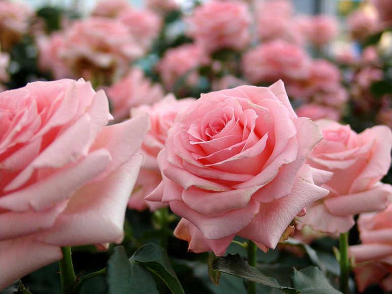 rosales-septiembre