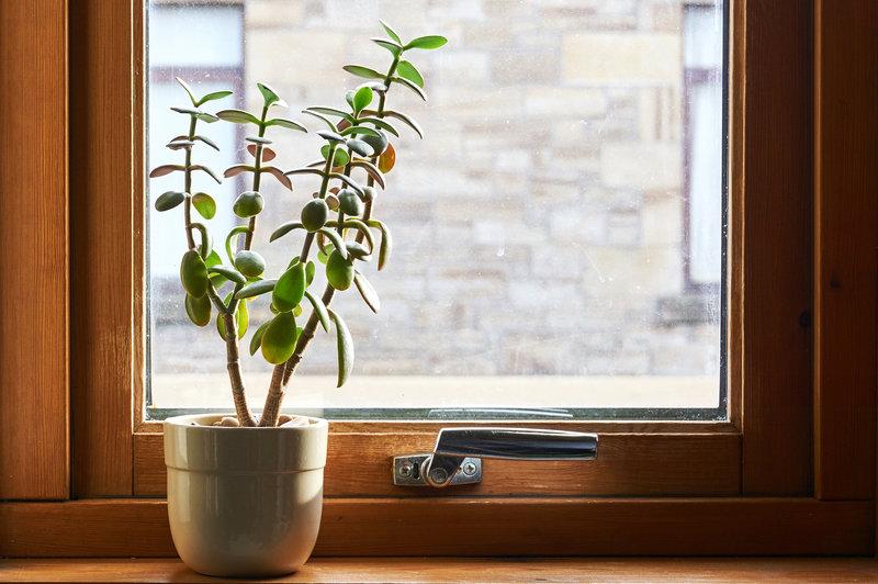 La importancia de la luz en las plantas