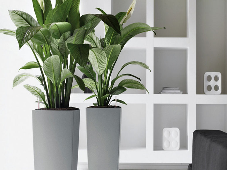 luz-plantas-de-interior