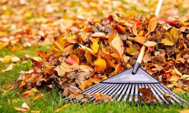 Agenda del jardín de Octubre