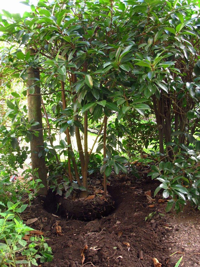 Com trasplantar les plantes amb xit garden catalunya for Arbustos para patios