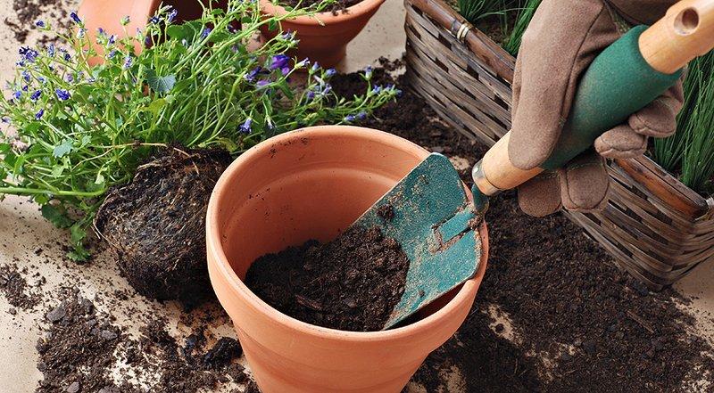 Cómo transplantar tus plantas con éxito.