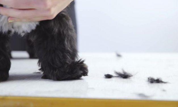 Cómo tratar la caída del pelo en los perros