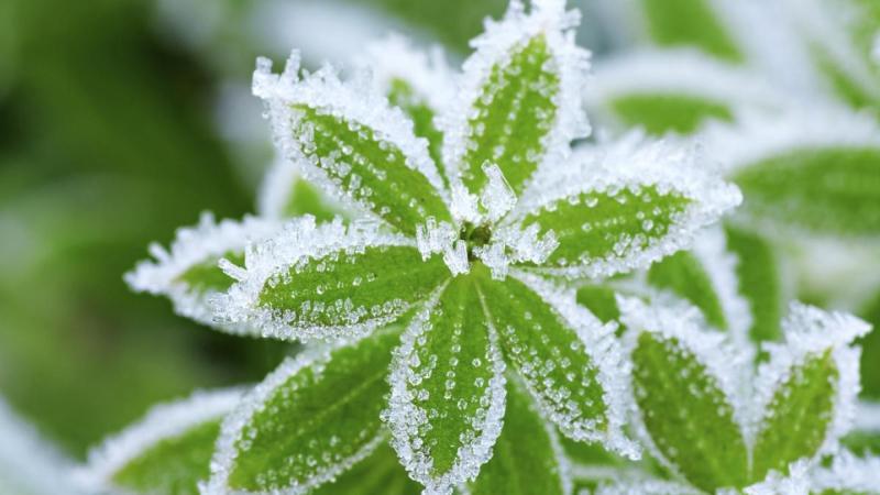 Cómo proteger tus plantas en invierno
