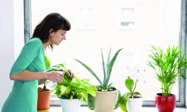 Consejos para mantener saludables tus plantas en invierno