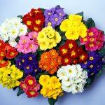 Planta del Mes de Diciembre: Matrimonio con un 25% de descuento
