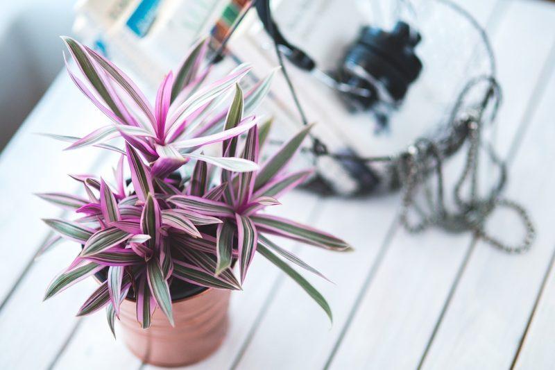 plantas-de-interior-cuidados-marzo