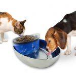 Cómo mantener a tu mascota siempre hidratada